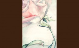tara-winkler-graphics-illustration-rose-2
